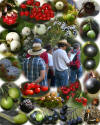 "Composite photo from Barbara Renshaw's  September 5, 2004 docent-led walk ""Coon Creek Berry Hunt."""